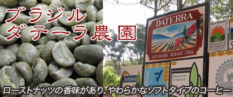 スペシャルティコーヒー ブラジル産 ダテーラ農園コーヒー豆