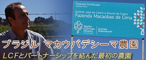 ブラジル マカウバデシーマ農園コーヒー豆