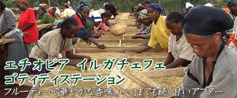 エチオピア産 ゴティティステーションコーヒー豆