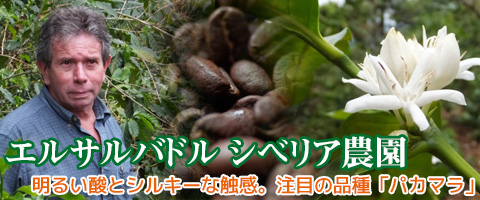 スペシャルティコーヒー エルサルバドル シベリア農園 パカマラ種 コーヒー豆
