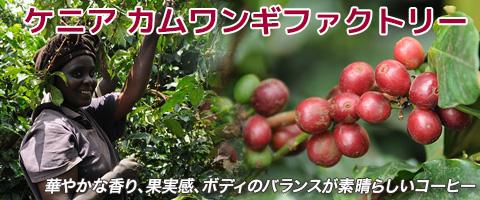 スペシャルティコーヒー ケニア カムワンギファクトリーコーヒー豆
