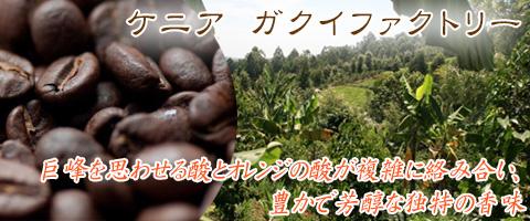 スペシャルティコーヒー ケニア ガクイファクトリーコーヒー豆