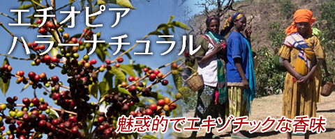 スペシャルティコーヒー エチオピア産 ハラーナチュラルコーヒー豆