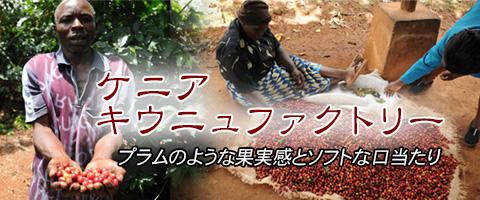 スペシャルティコーヒー ケニア産 キウニュファクトリー