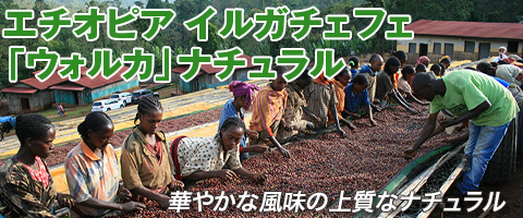 エチオピア イルガチェフェ ウォルカ ナチュラル コーヒー豆